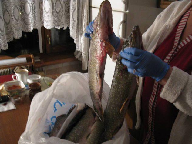 Бійців у госпіталі почастують смачненькою рибкою