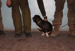 Чоторилапі бійці, які охороняють Бахмут (ФОТО)